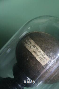 1824 Cow Bezoar Curiosity Taxidermy Curio Antique Scientific Medical