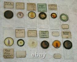 50 Antique Victorian Microscope Slides Rare Unusual Specimens In Original Case
