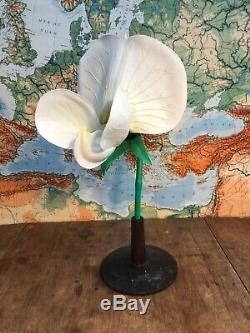 A Vintage Botanical Model Of A Pea Plant School Educational Teaching Aid