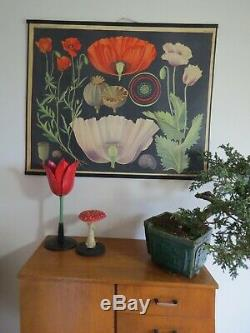A Vintage Botanical Model Of A Tulip School Educational Teaching Aid