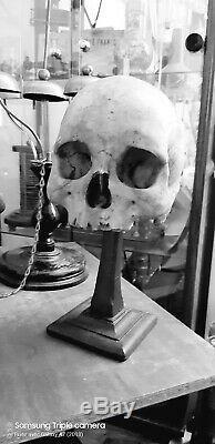 Antique real medicalHuman Skull! Very rare! Modèle crâne humain médical réel