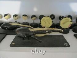 Cell Development Plaster Models Of Frog Or Toad, Vintage Biology Flatters &