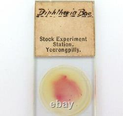 RARE 1890s DIPHTHERIA SLIDE. STOCK EXPERIMENT STATION, YEERONGPILLY QLD
