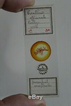 Superb Cased Set Of 200+ Antique Botanical Microscope Slides By A. Peniston 1902