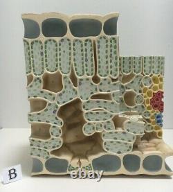 Vintage Biology Cell Educational Models botanical models