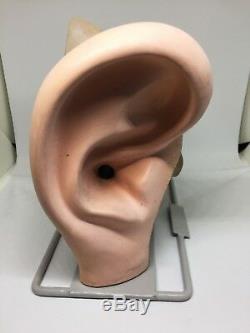 Vintage Human Ear Model HUMAN BIOLOGY Anatomical Auditory ENT Otolaryngologist